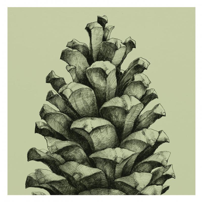 Pine Cone Green 50x70 cm