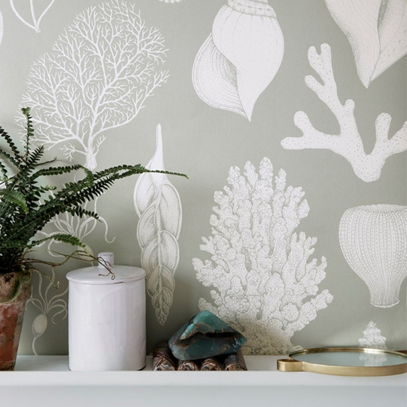 Katie Scott Wallpaper - Shells