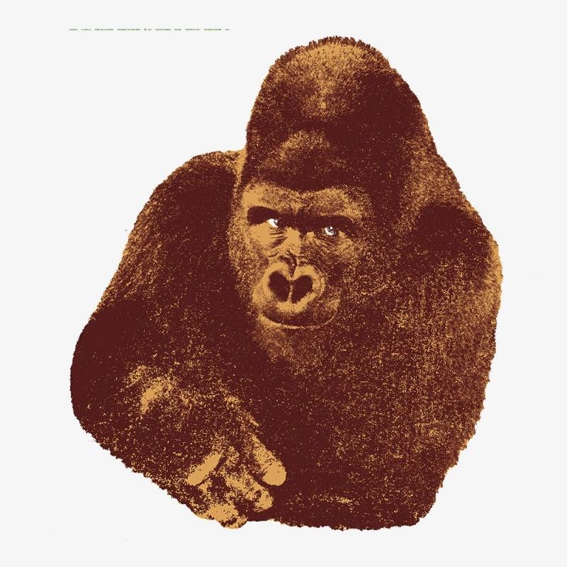 Quindici, Il Gorilla